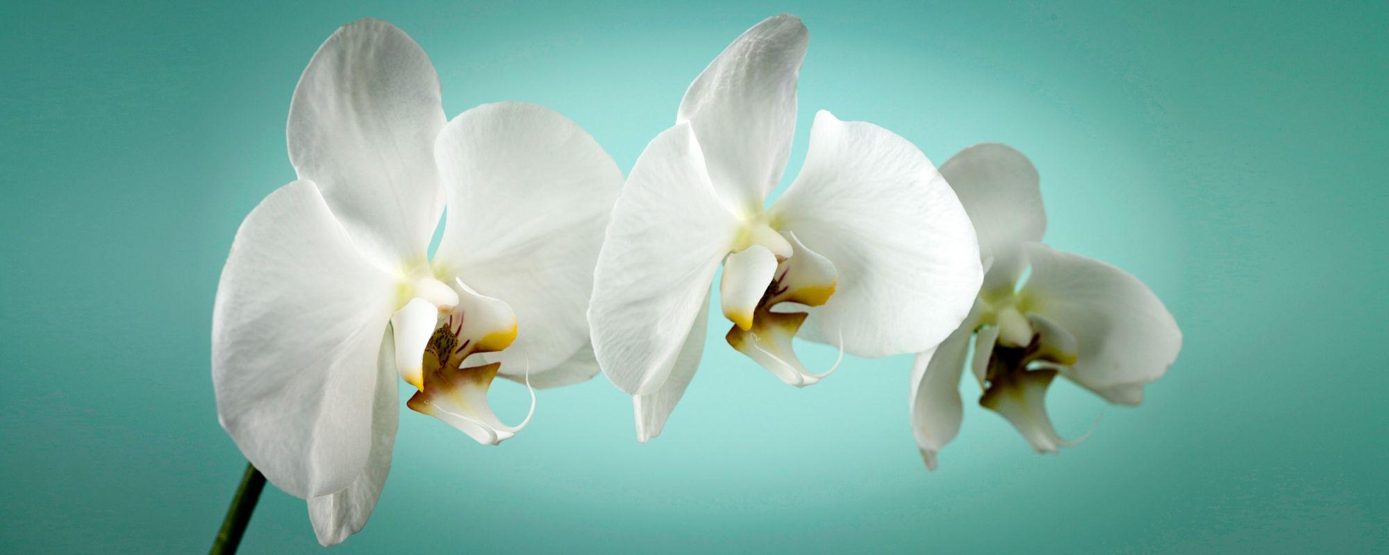 GRAHAM BROWN Graham & Brown Leinwandbild »Orchidee«