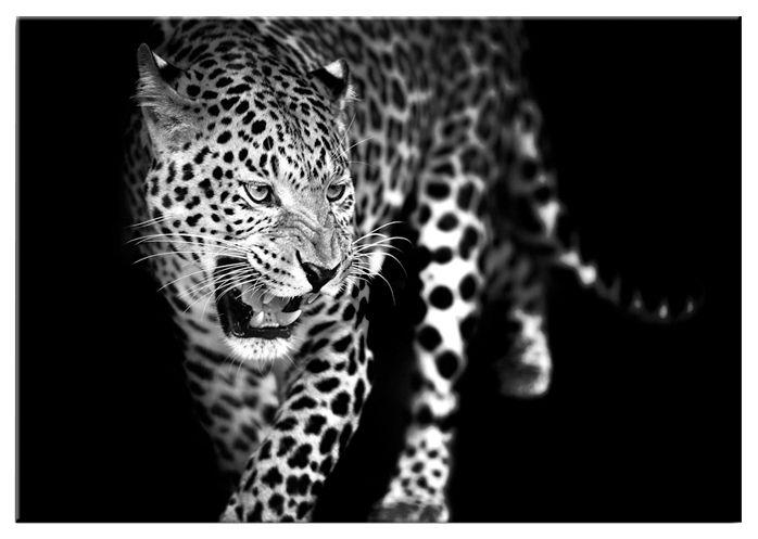 GRAHAM BROWN Graham & Brown Glasbild »Leopard«