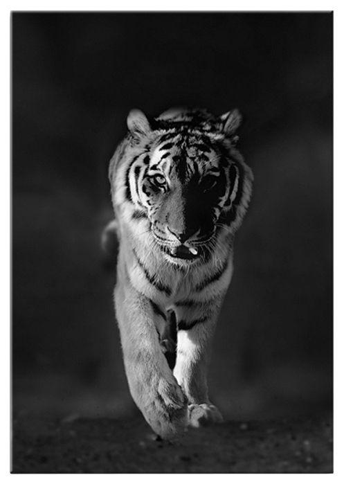 GRAHAM BROWN Graham & Brown Glasbild »Tiger«