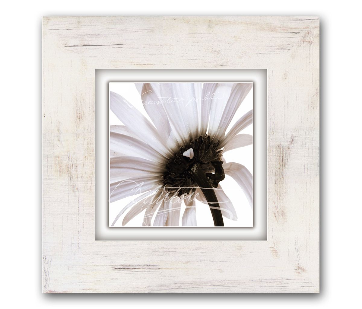 Home affaire Bild »Zartrosa Blüte«, Blume