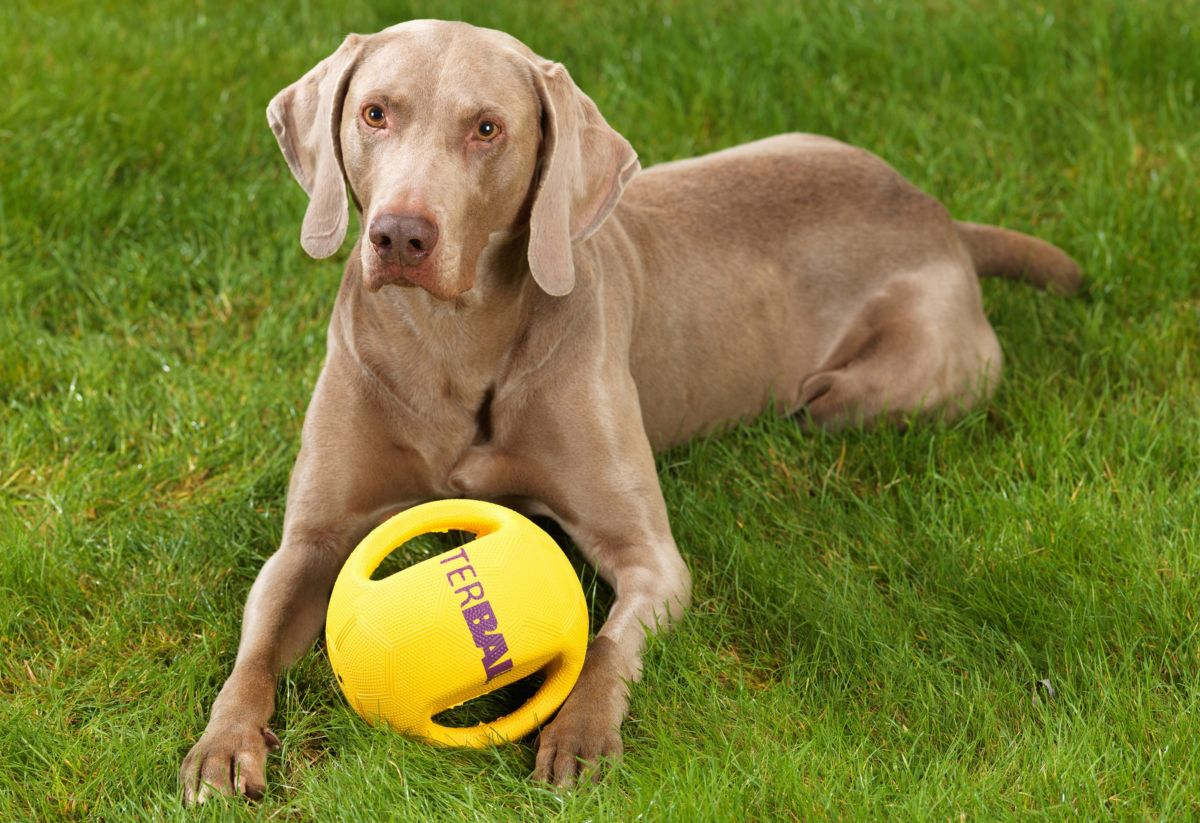 Hunde-Spielzeug »Interball«