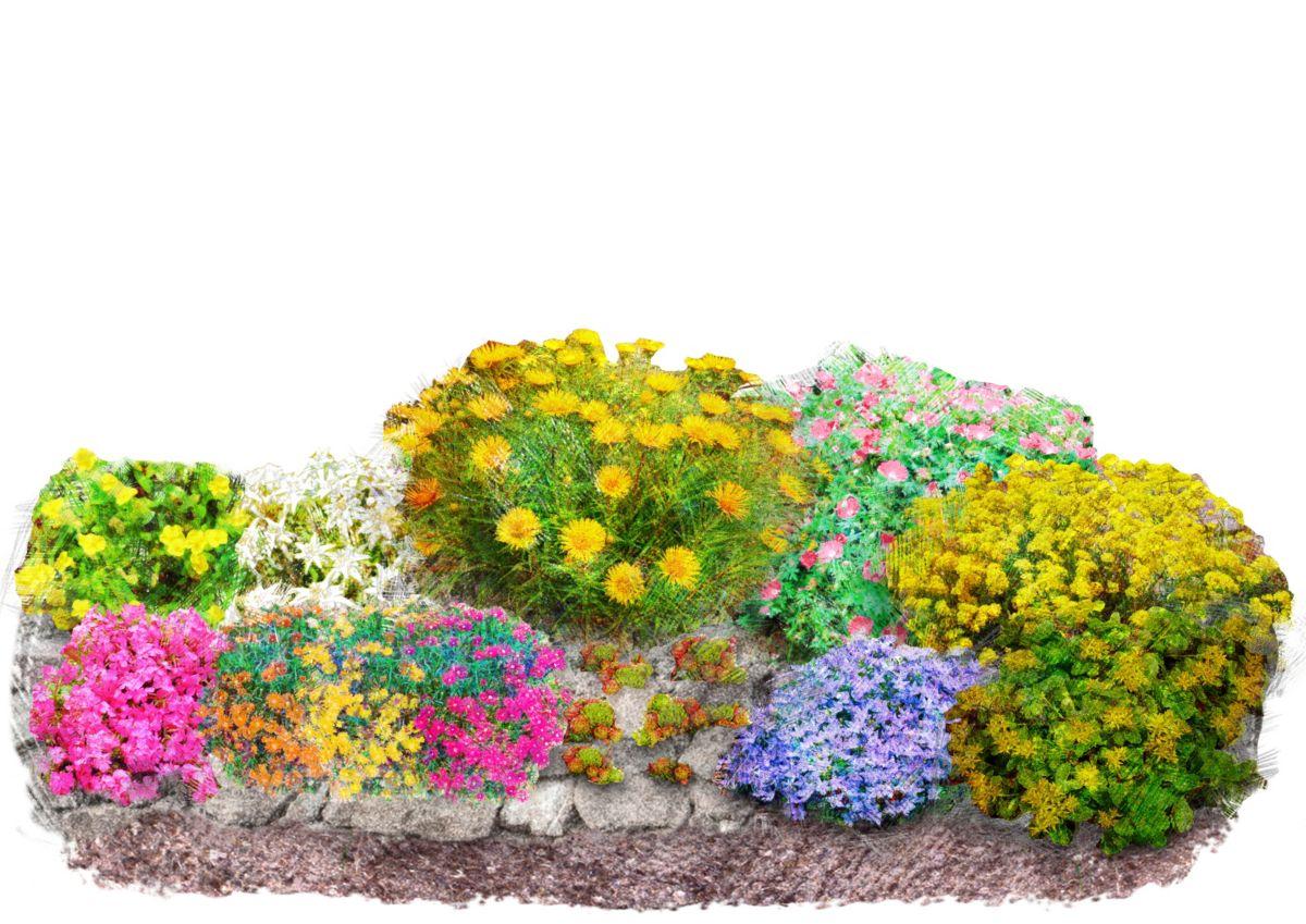 Pflanzenset »Bunter Steingarten«