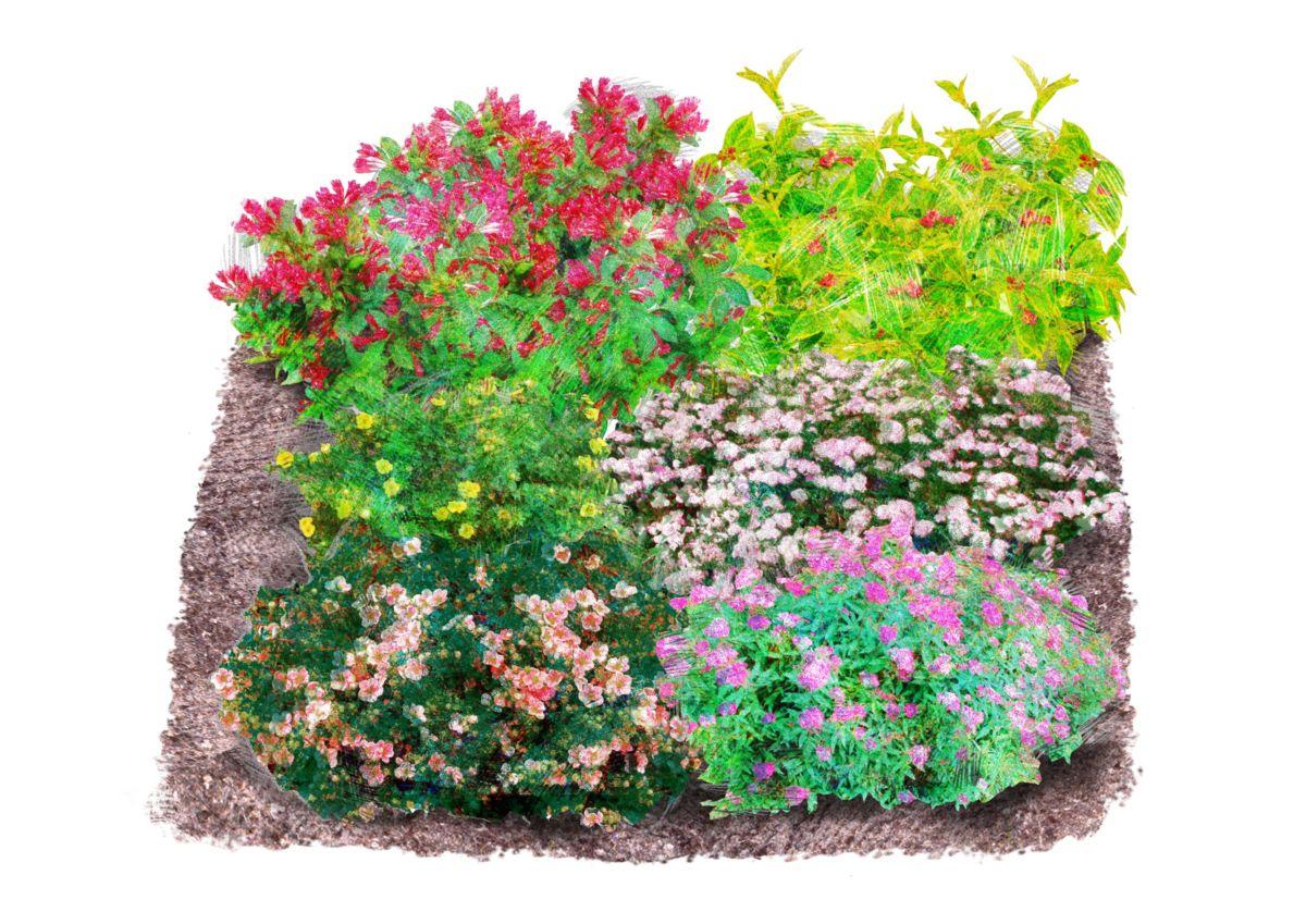Set: Gehölz »Blühend« 6 prachtvolle Pflanzen