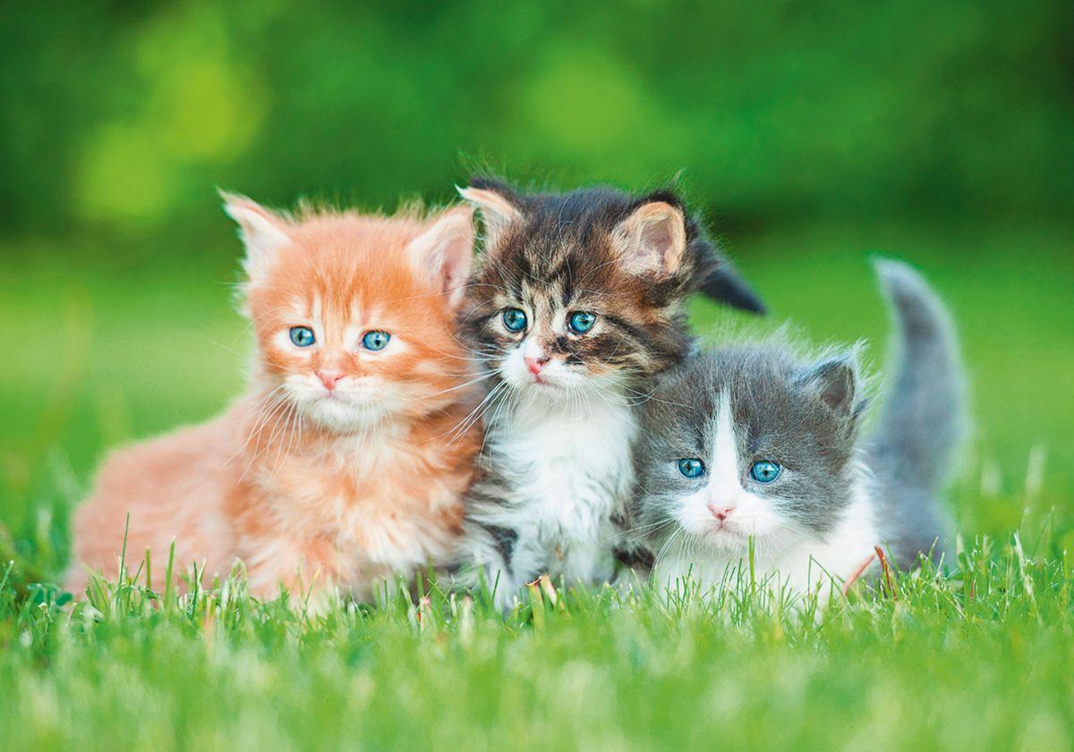 heine home Leinwandbild Katzen