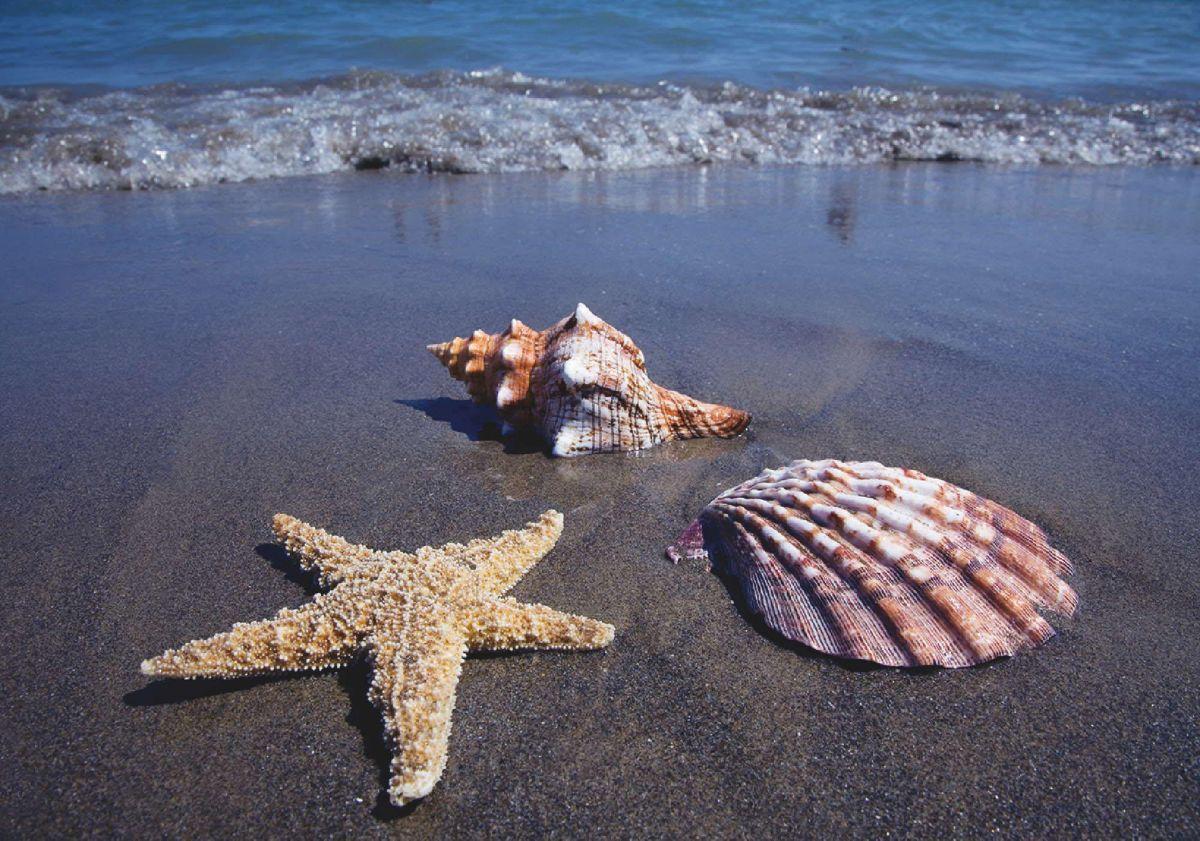 Home affaire Leinwandbild »Sandstrand und Meer«...