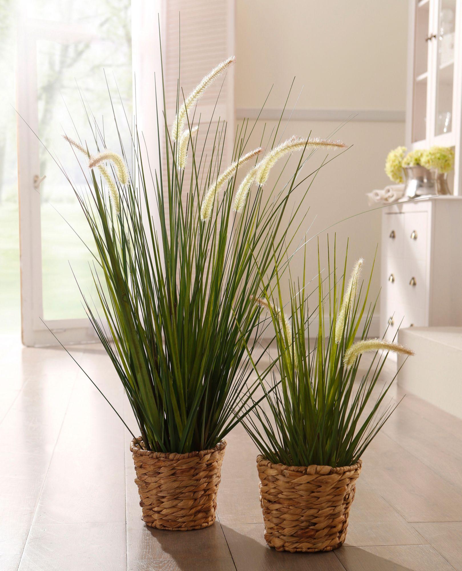 pflanzen in nanopics im alter bis 1 m breit und ca 50 cm hoch sehr langsam wachsend. Black Bedroom Furniture Sets. Home Design Ideas