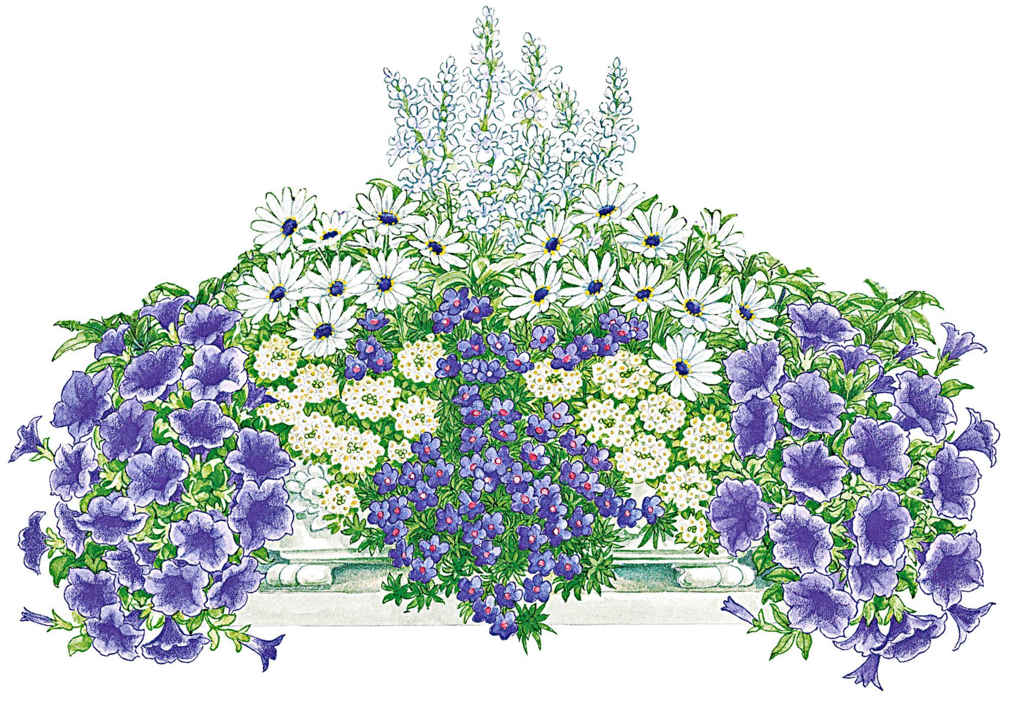 balkonpflanzen sets g nstig online kaufen beim schwab versand. Black Bedroom Furniture Sets. Home Design Ideas