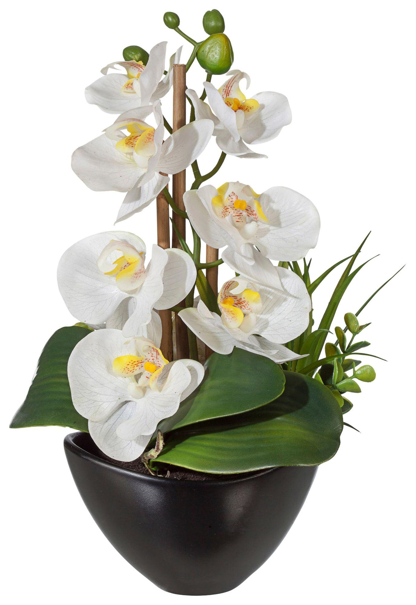 kunst orchideen g nstig online kaufen beim schwab versand. Black Bedroom Furniture Sets. Home Design Ideas