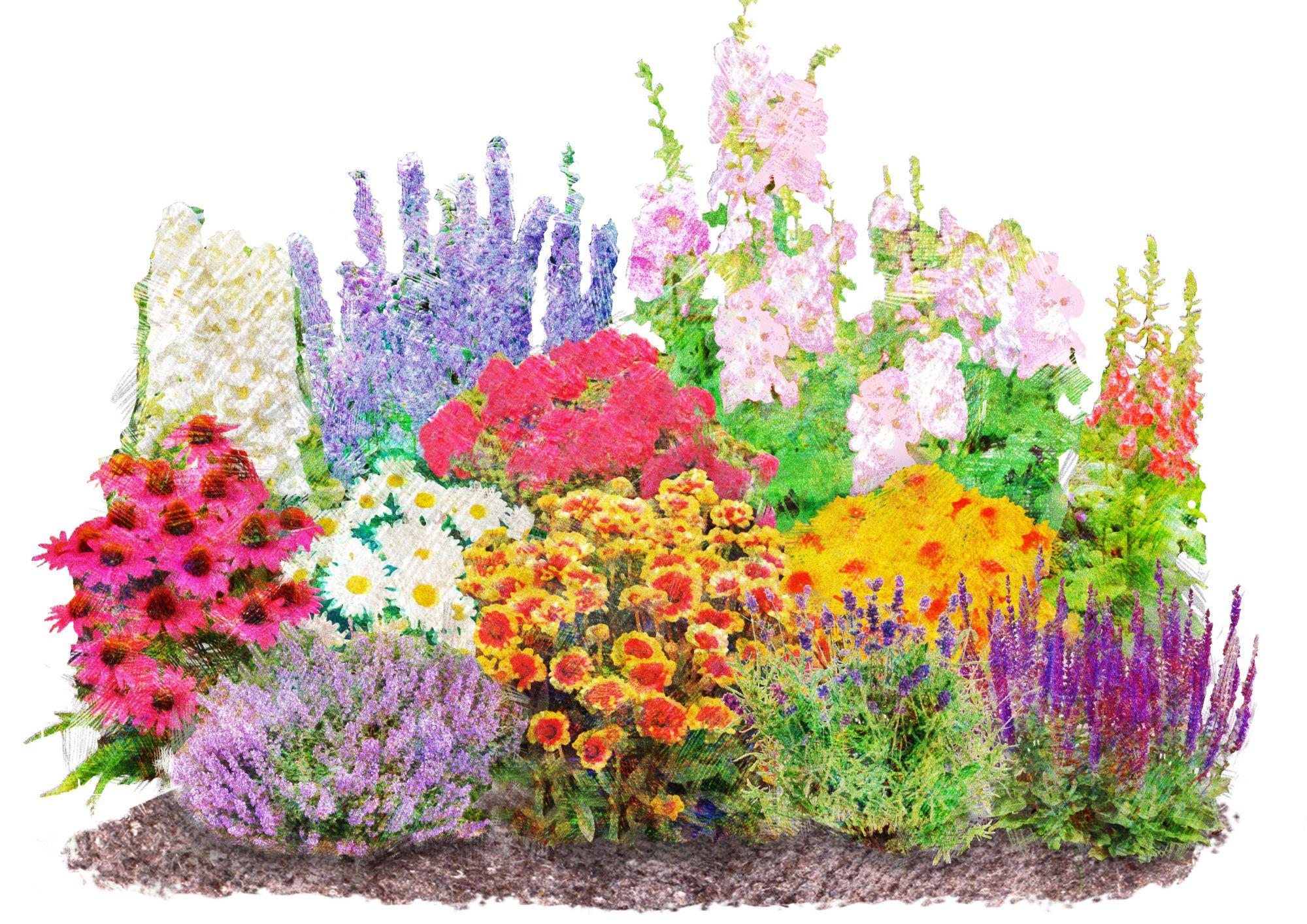 beetpflanzen set landhausgarten 12 pfl schwab. Black Bedroom Furniture Sets. Home Design Ideas