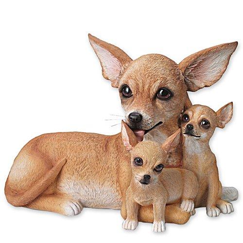 Små Chihuahua-kyssar