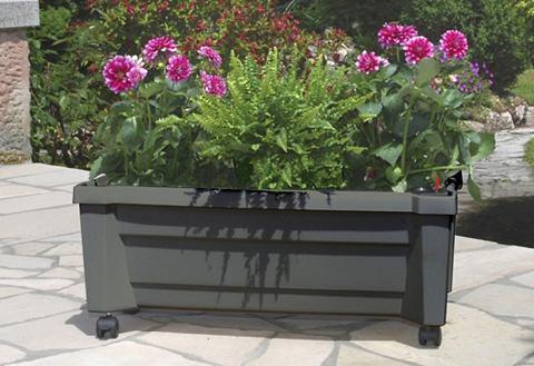 Ящик для растений