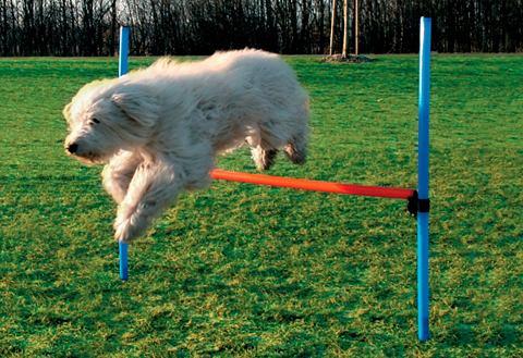 Препятствие для собак »Dog Agili...