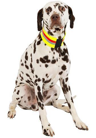Ошейник для собак »Signalhalsban...