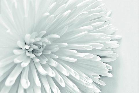 Картина »White цветок Heart&laqu...