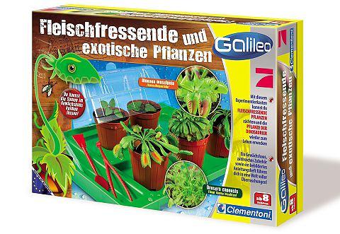 Fleischfressende Pflanzen ® &raquo...