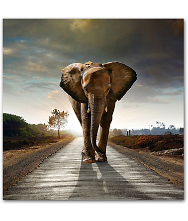 Premium collection by Home affaire Acrylglasbild »Elefant«, 50/50 cm - braun