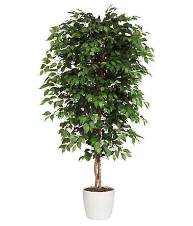 Premium collection by Home affaire Kunstpflanze »Ficus Benjamini« - Höhe120cm0