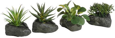 HOME AFFAIRE Dirbtinis augalas »Sukkulenten« ant St...