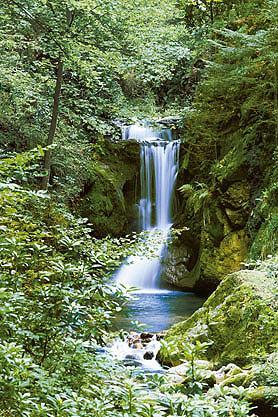 Fototapetas »Waterfall in Spring« 183/...
