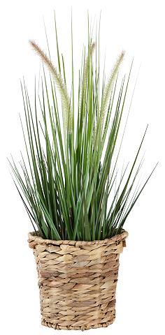 HOME AFFAIRE Dirbtinis augalas »Gras« su Vazonas iš...
