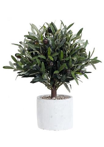 Dirbtinis augalas »Olivenbaum«