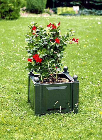 Vazonas-dėžė augalams gr