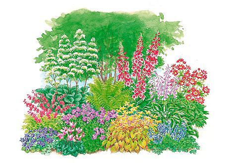 Pflanzenset »Schattenpflanzen« 11 Pfla...