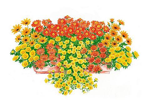 Pflanzenset »Sonnige Farben«