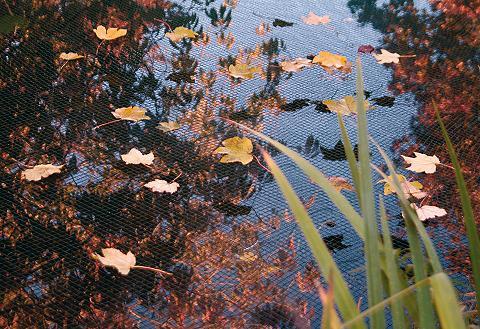 Apsauginis tinklelis nuo lapų »1000 x ...