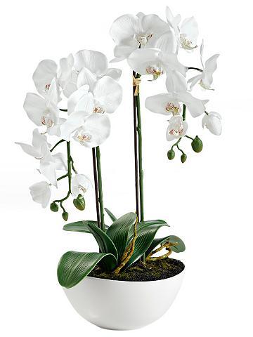 heine home Dirbtinė orchidėja in Dubenėlis