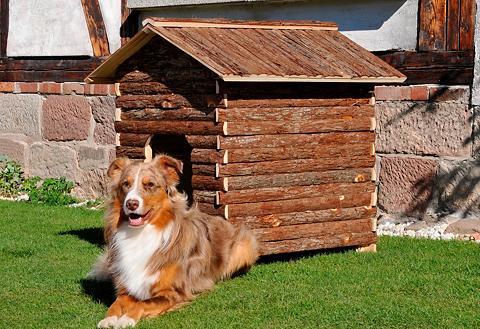 SILVIO DESIGN šuns būda »Lars«