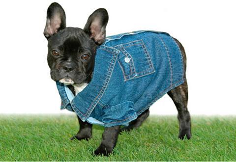 Paltas šuniui »Jeans-Overall - Snoopy«...