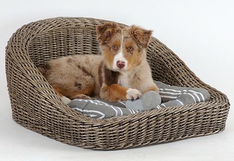 Sofa šuniui ir Katzensofa »Timmy«