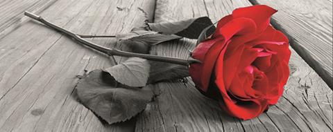 HOME AFFAIRE Paveikslas ant drobės »Rose on the woo...