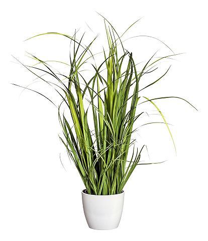 HOME AFFAIRE Dirbtinis augalas »Gras« in padėties d...