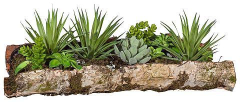 HOME AFFAIRE Dirbtinis augalas »Sukkulenten« in Bau...
