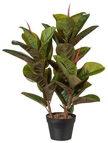 Dirbtinis augalas »Ficus elastica«