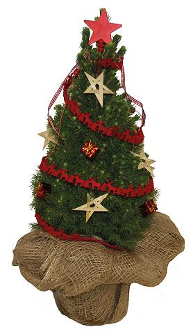 Konifere »Weihnachtsbaum« raudona gesc...