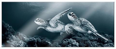 Paveikslas »Narchuk-Schildkröten« 80/3...