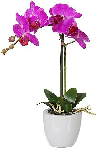 Dirbtinis augalas »Phalenopsis« lila i...