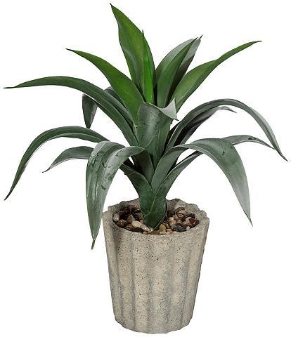 Dirbtinis augalas »Agave« ir Vazonas (...