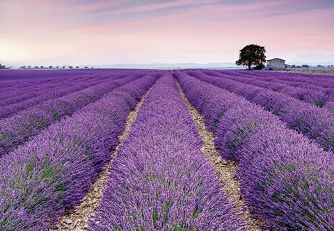 Tapetai »Provence« 368/248 cm