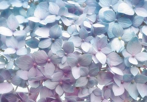 Popieriniai tapetai »Light Blue« 368/2...