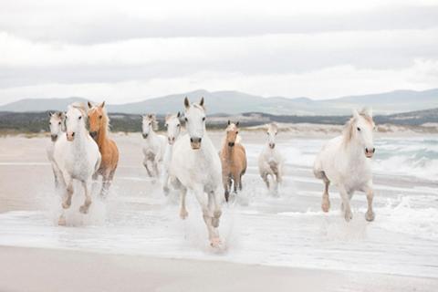 Fototapetas »White Horses« 368/254 cm