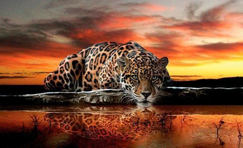 HOME AFFAIRE Fototapetas »Leopard« 368/254 cm
