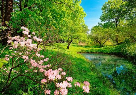 Fototapetas »Park im Frühjahr« 366/254...