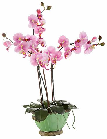 HOME AFFAIRE Dirbtinė gėlė »Orchidee«