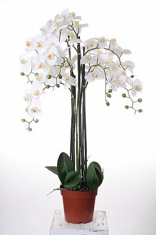 HOME AFFAIRE Dirbtinė gėlė »Orchidee XXL«