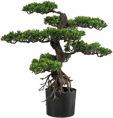 Creativ green Kunstbonsai »Bonsai« Bonsai aukštis 65...