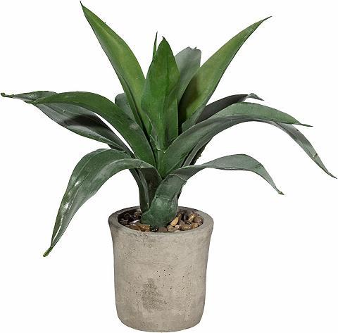 HOME AFFAIRE Dirbtinis augalas »Agave« im cementini...